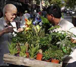 Mobile plant seller