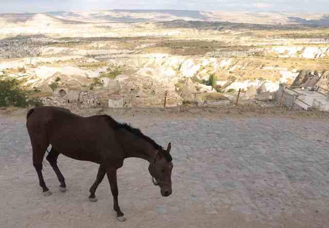 Cappadocian plain with horse
